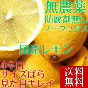 ポイント5倍【送料無料】【愛媛県大三島産】無農薬レモン【サイズバラ4キロ】 国産レモン 4kg 訳あり ワケあり わけあり レモン れもん 訳あり果物 国産 無農薬 柑橘 果物 くだもの フルーツ