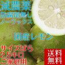 ポイント5倍 10%値引き中 予約販売 送料無料【愛媛県大三島産】国産レモン グリーンレモン 【サイズばら2.5キロ】ご家…