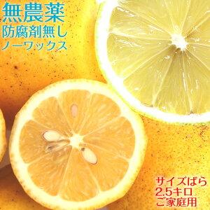 ポイント5倍【送料無料】 【愛媛県大三島産】無農薬レモン【サイズバラ2.5キロ】 国産レモン 訳あり ワケあり わけあり レモン れもん 訳あり果物 国産 無農薬 柑橘 果物 くだもの フルーツ