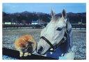 内藤律子クリアファイル【オグリキャップ仲良くしようよC】サイン(黒)オグリキャップと猫・サラブレッド※メール便可・ラッピングの…