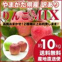 山形県産 りんご 訳あり ミックス 10キロ ご家庭用 産地直送 お楽しみ 品種おまかせ 林檎 リンゴ 10kg