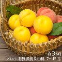 桃 黄桃&白桃のセット 3kg 7玉〜15玉 山形県産 送料無料 マンゴーピーチ 黄桃 もも モモ