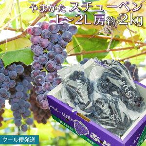 山形県産 ぶどう スチューベン 2kg 秀品 山形の葡萄 ブドウ 葡萄 送料無料【沖縄及び利用発送不可】