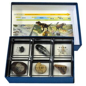 示準化石6種 【地学学習】