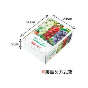 【農園名等必要】ぶどう用化粧箱 高級ぶどう A-2 三色 300×225×100mm 1ケース50枚入り
