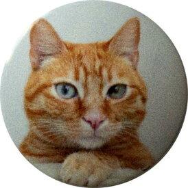 【送料無料】 車 アクセサリー オデッセイ ODYSSEY RC1 RC2 RC4 スタートボタンカバー ・猫・ えっ!貼るだけ?かんたん取付 プッシュ スタート スイッチ カバー Push Start Switch Accessory for HONDA・猫・ オデッセイ ODYSSEY RC1 RC2 RC4車用 HONDA