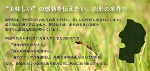 はえぬき3(山形県の米作り)