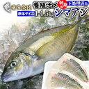 シマアジ 刺身 フィレ 食べ物 冷蔵 1kg〜1.5kg 九州 鮮魚 活〆 贈答用 海産物 海鮮 おつまみ お取り寄せグルメ 九州 …