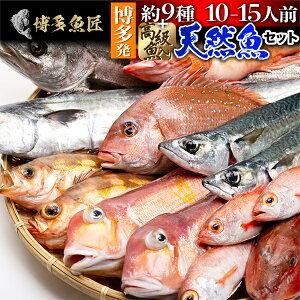 天然魚セット(松) 鮮魚 詰め合わせ 福岡 九州 刺身 高級魚 約9種類 10〜15人前 海産物 海鮮 お取り寄せグルメ