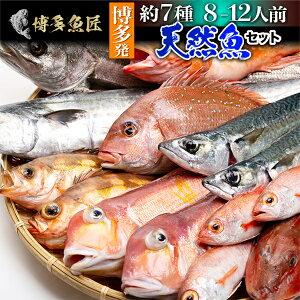 天然魚セット(竹)鮮魚 詰め合わせ 福岡 九州 鮮魚 刺身 約7種類 8〜12人前 海産物 海鮮 お取り寄せグルメ 送料無料