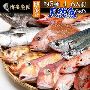 天然魚セット(梅)鮮魚 詰め合わせ 福岡 九州 鮮魚 刺身 約7種類 4〜6人前 海産物 海鮮 お取り寄せグルメ