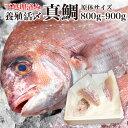 鯛 刺身 フィレ 食べ物 ビールに合う 冷蔵 1kg弱 九州 鮮魚 養殖タイ 活〆 お食い初め 海産物 海鮮 お取り寄せグルメ …