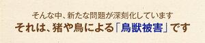農家ハンターみかん5kg熊本県産訳ありみかん産地厳選ご家庭向け訳ありミカンです。熊本ミカン熊本みかん