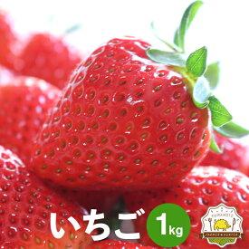 送料無料 いちご 4パック イチゴ1パック250g〜を4個 合計1kg以上!熊本県の宇城市から新鮮な苺をお届けします!!熊本県産のブランド「恋みのり」を三角町から農家さん直送!いちご専門農家さんの自慢のイチゴをお試しください。