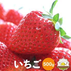 送料無料 いちご 2パック イチゴ2パック250g〜を2個 合計500g以上!熊本県の宇城市から新鮮な苺をお届けします!!熊本県産のブランド「恋みのり」を三角町から農家さん直送!いちご専門農家さんの自慢のイチゴをお試しください。