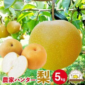 敬老の日カード選択できます!送料無料 梨 5kg 熊本県産 ブランド梨 豊富な品種でお中元やお盆のお供え、敬老の日、お彼岸と多くの用途にご利用いただいています!取り扱い品種(菊水 幸