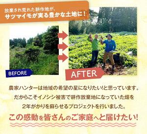 情熱大陸出演記念耕作放棄地再生プロジェクトイノシシから守り抜いた「たっちゃんのサツマイモ5kg」無農薬