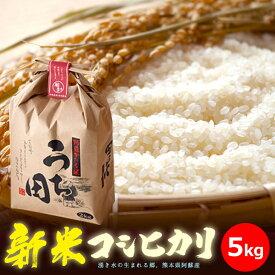 『熊本県阿蘇 内田農場 2020年新米 穫れたて美味しい!コシヒカリ5kg』お米5kg※代引き不可※