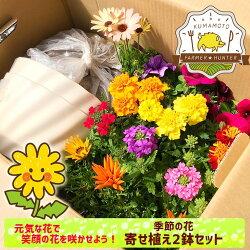 元気な花で笑顔の花を咲かせよう!心もリフレッシュ『季節の花寄せ植え2鉢セット』4〜6鉢を組合せ、プロ仕様のふかふかの土を隙間に入れるだけ♪ペチュニア、バーベナ、マリーゴールド、ガザニア、ベコニア等鉢や土、肥料すべて入った寄せ植えセット送料無料