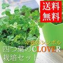 四つ葉のクローバー 栽培セット 栽培キット かわいい 四葉 種 発芽保証付 ガーデニング 観葉植物 キッチンインテリア …