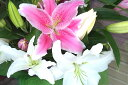 悲しみのお花