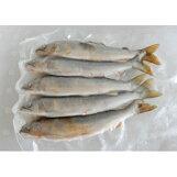 勝山市漁業協同組合:天然遡上の九頭竜鮎を急速冷凍しました「九頭竜川勝山あゆ」(クール冷凍便)