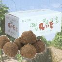 ※予約受付※ 「加賀丸いも 10kg」加賀平野の豊かな土と水に育まれたねばねば山芋 ※季節商品※
