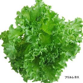 富山の水で育った無農薬新鮮野菜「レタス3種類(6個入)」(クール冷蔵便)