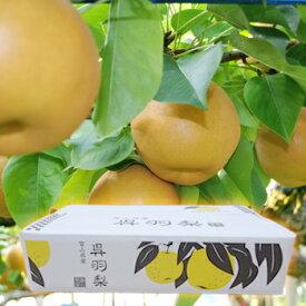 ※予約受付※ 呉羽梨「幸水」10玉(特大)・5kg/富山のエコファーマー認定農家よりを直送 ※季節商品※