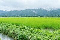 米・人を育てる水取り寄せ 米 コメ こめ 通販 おすすめ オススメ 美味しい おいしい ふっくら 贅沢
