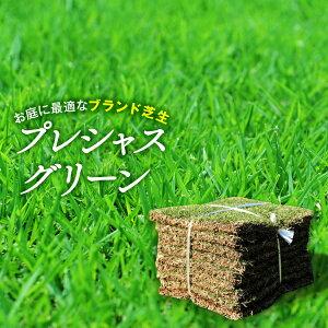 【普通便】芝生 プレシャスグリーン改良高麗芝10平米 宮崎県産