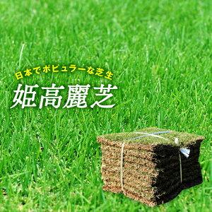 芝生 天然芝 姫高麗芝 2平米 宮崎県産