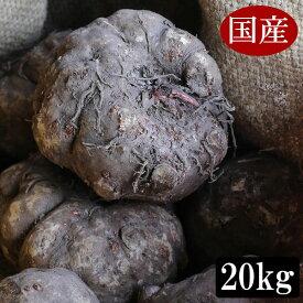 令和元年度秋収穫 国産こんにゃく芋 20キロ 業務用にも使える みやままさり こんにゃく芋です 仕入商品 メーカー直送品