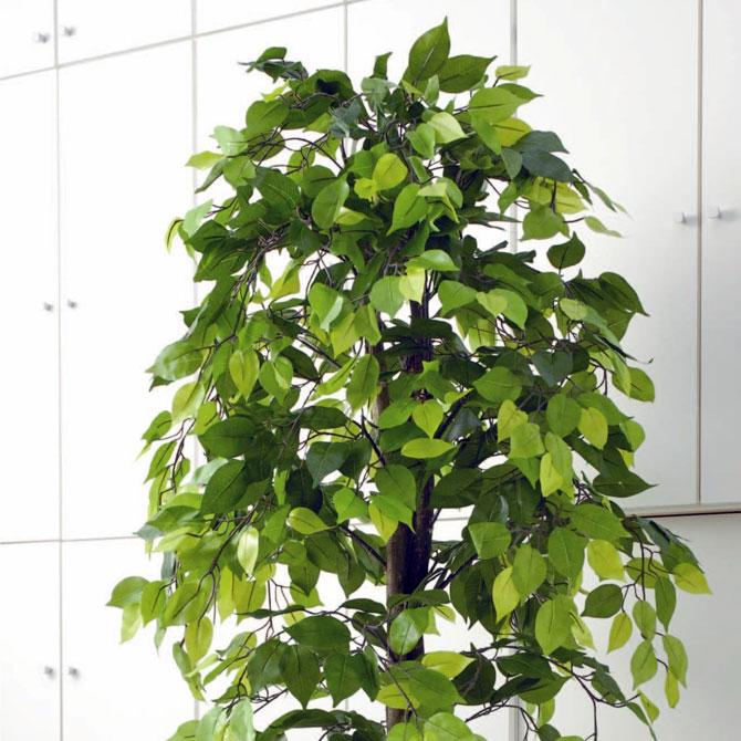 観葉植物 フェイクグリーン ベンジャミン 160cm 空気清浄効果 下草付き 観葉植物 ベンジャミン インテリア 雑貨 小物 日用品 観葉植物 大型 造花