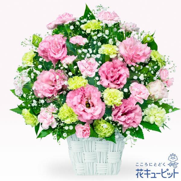 花キューピット【お祝い】yc00-511864トルコキキョウのピンクアレンジメント