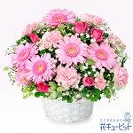 ピンクガーベラのアレンジメント花キューピット