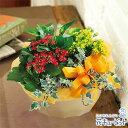 花キューピット【敬老の日フラワー】ml10yr-522078カランコエの寄せ鉢