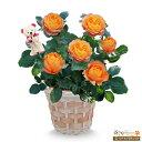 花キューピット【母の日産直ギフト】mt04016-710978バラ ベビーロマンティカ