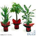 花キューピット【お花屋さんがお届け!観葉植物】ddg00-kanyou10観葉植物(おまかせ)