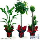 花キューピット【お花屋さんがお届け!観葉植物】観葉植物(おまかせ)ddg00-kanyou15 インテリア グリーン 鉢植え お…