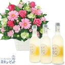 花キューピット【お祝いセットギフト】ピンクガーベラのアレンジメントとしゅわしゅわ木内梅酒3本セットub03-ub03511570