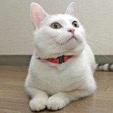 【猫】【首輪】iCatアイキャットカジュアルカラーデニムドット。3.8kgMIXのえのきちゃんはレッドを着用