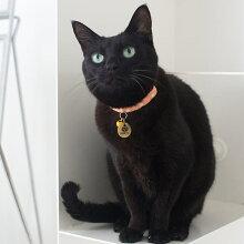 【迷子札】【犬】【猫】iDog&iCatオリジナルメタルネームタグ迷子札くろネコ。二重カンはシルバーにはシルバー、ゴールドとブロンズにはアンティークゴールドのものが付きます。