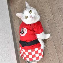 【浴衣】【犬】【服】MIX3.8kgのえのきちゃんは赤色のDSを着用