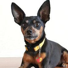 【迷子札】【犬】【猫】ミニピン3.5kgのバジルちゃんは赤りんごを使用