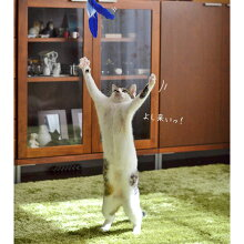 【猫】【おもちゃ】手に持つとこのサイズ(ロッド伸ばしていない状態)