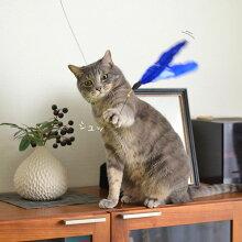 【猫】【おもちゃ】今度こそ捕まえるぞっと手を広げて