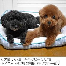 小型犬の多頭飼いのお家におすすめ