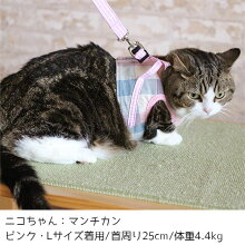 マンチカン4.4kgのニコちゃんはピンクを着用