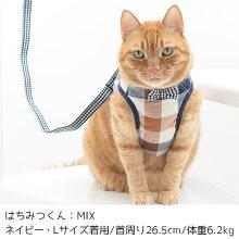MIX6.2kgのはちみつくんはネイビーのLサイズを着用